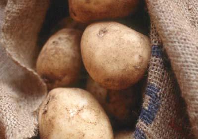 Patata amflora