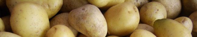 patata amflora transgenica