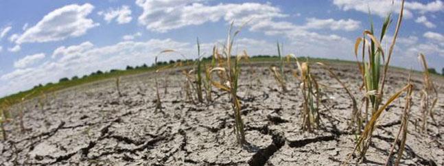 cultivos resistente sequia