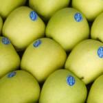 genoma manzana golden