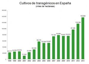 Cultivos transgenicos maiz bt espana 2013