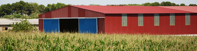 cultivos transgenicos biotecnologia agraria