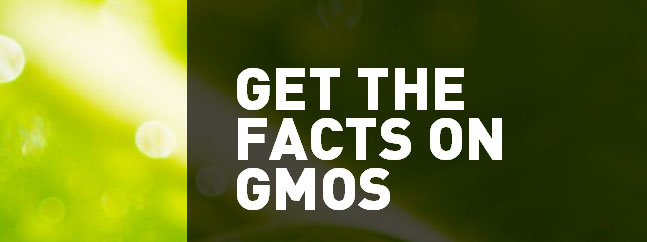 get the facts on GMOs transgenicos biotecnologicos