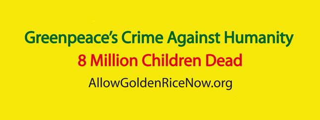 arroz dorado greenpeace transgenicos