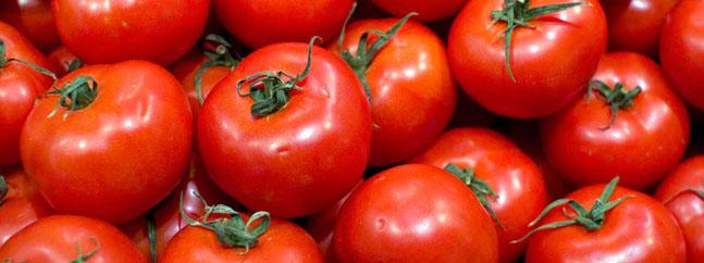 tomates biotecnologia transgenicos modificados geneticamente sequia