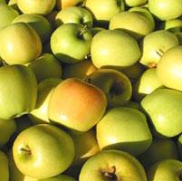 Manzanas modificadas genéticamente