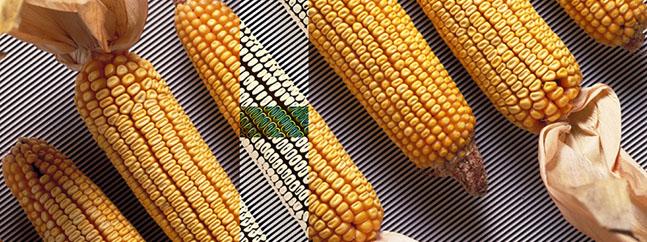 GMO-Matrix jrc transgenicos