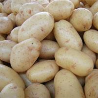 patata transgenica sudafrica enfermedades