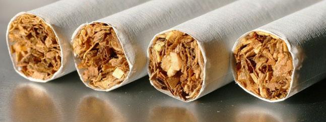 tabaco transgenico biotecnologia