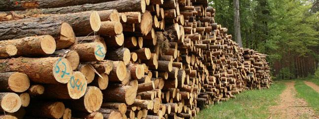 arboles mejora produccion papel biocombustibles