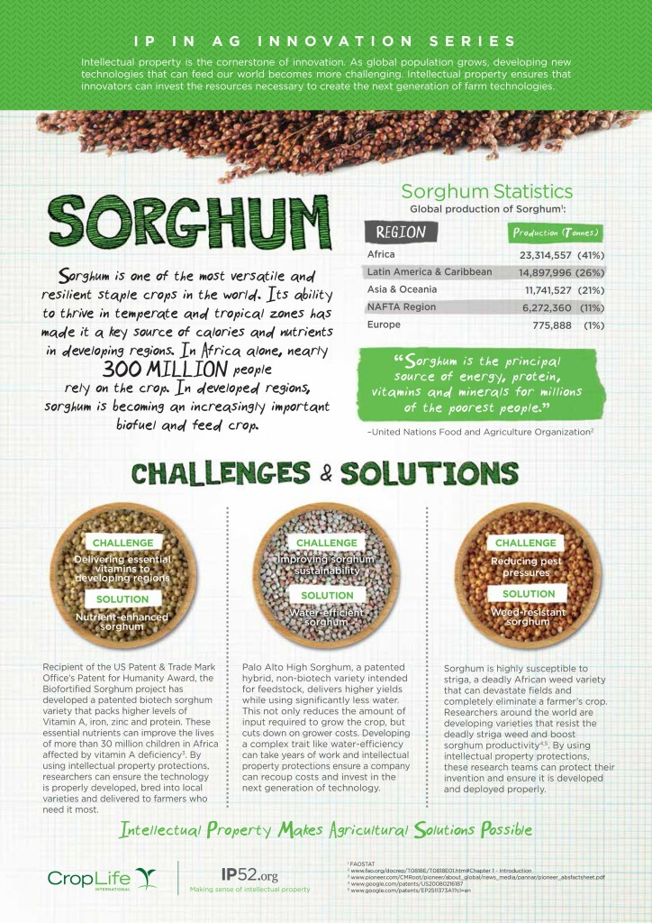 sorghum_infographic_final_web