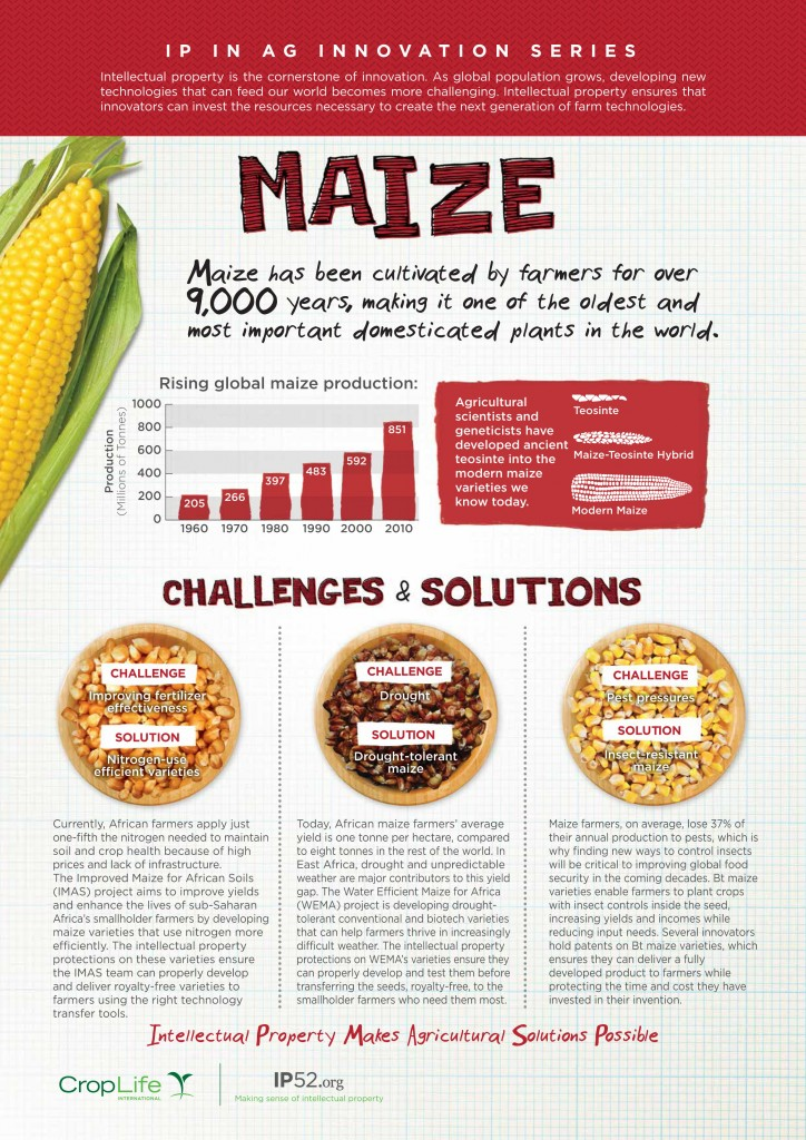 maize_infographic_final_web