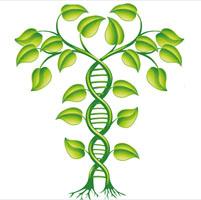 base de datos genes