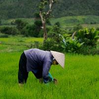Pequeños agricultores china