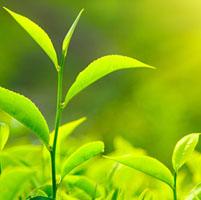 fotosintesis rendimiento plantas