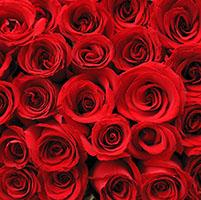 Rosas aroma