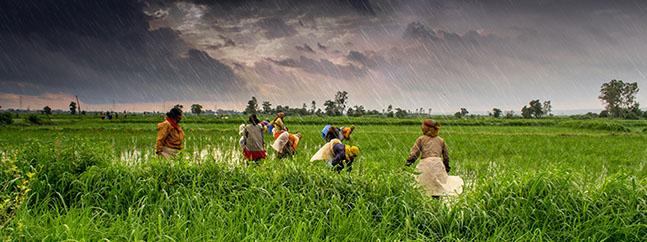 India agricultores 2050
