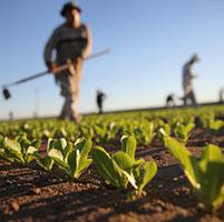 cultivo planta agricultura