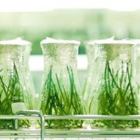 investigacion plantas