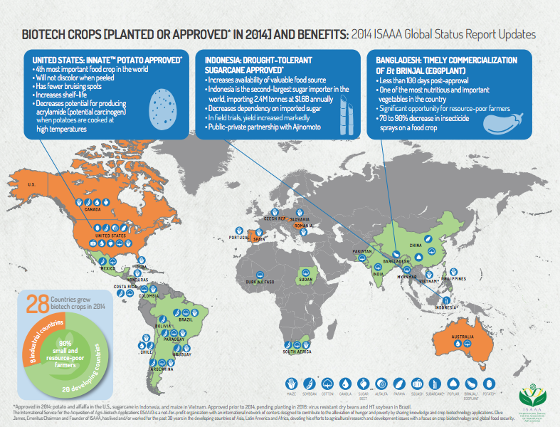 Infografia ISAAA 01