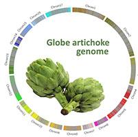 Alcachofa genoma