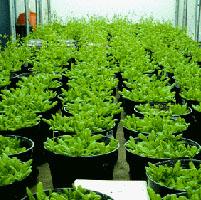 Investigación en plantas