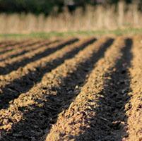 Suelos cultivos