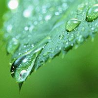 hoja planta fotosintesis