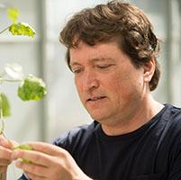 Biologo enfermedades plantas