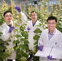 Árboles biocombustibles
