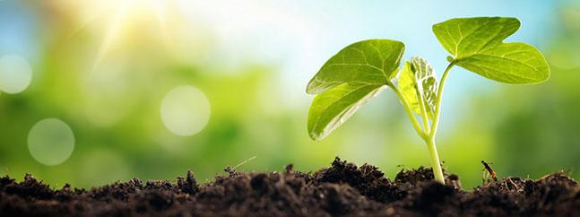 Planta nacimiento interior