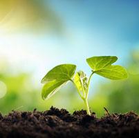 Plantas cultivo