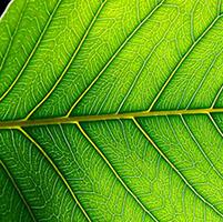 fotosíntesis plantas