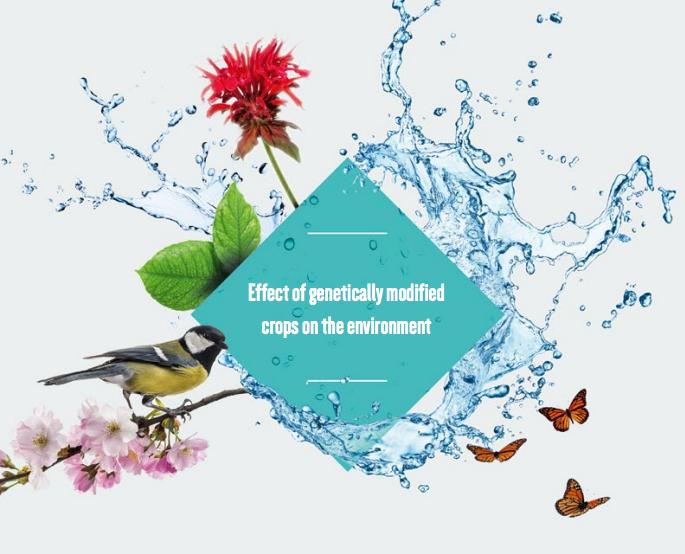 Impacto ambiental transgenicos