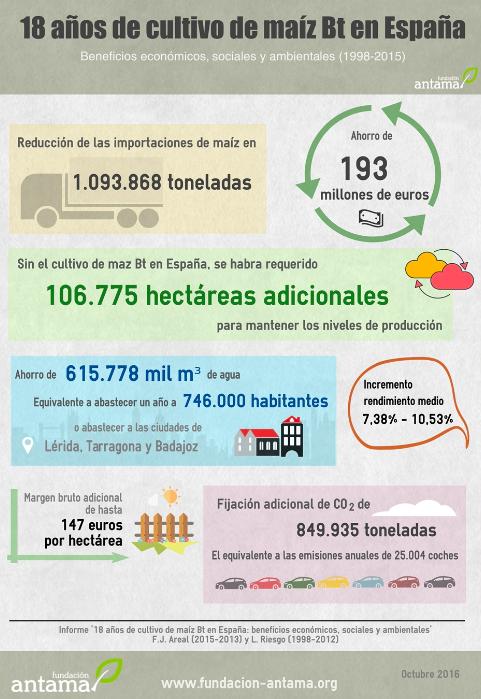 10 años de cultivo de maíz Bt en España