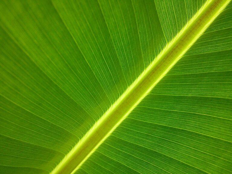 Proteina care protejează plantele de lumina excesivă